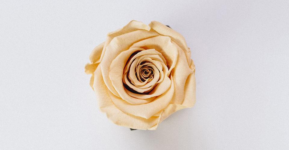 o nome e a rosa